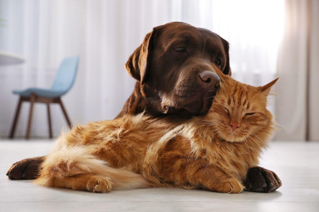 Ein Hund und eine Katze kuscheln
