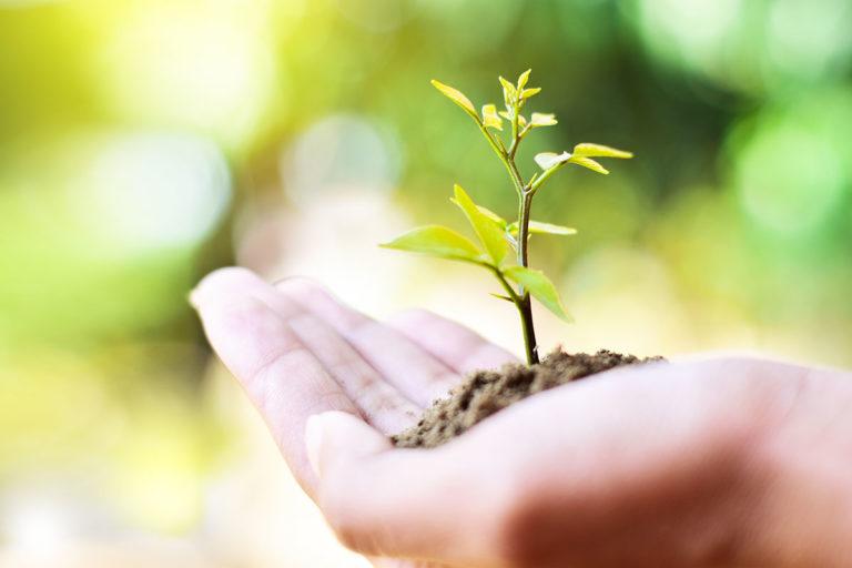 Hand mit einer frischen, jungen Pflanze